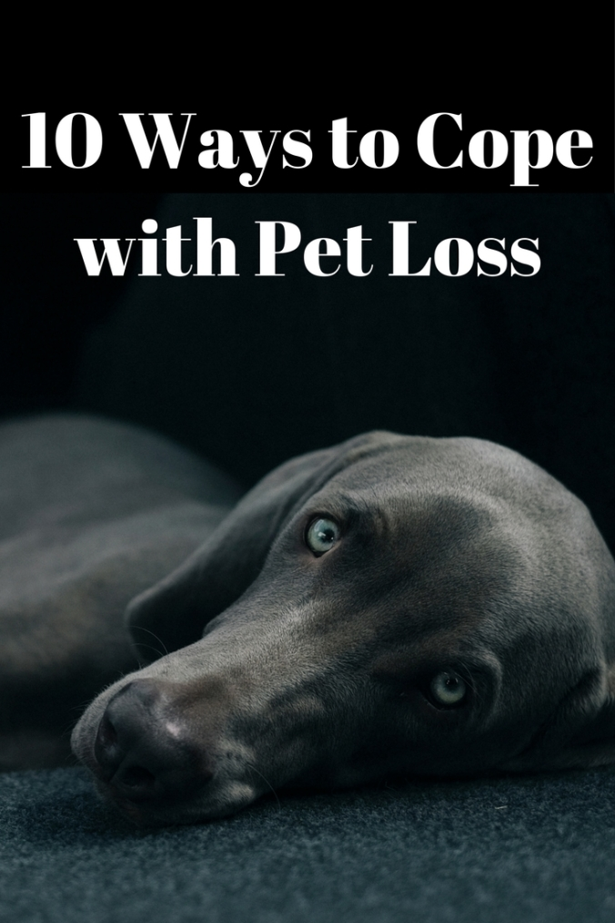10 Ways to Cope with Pet Loss
